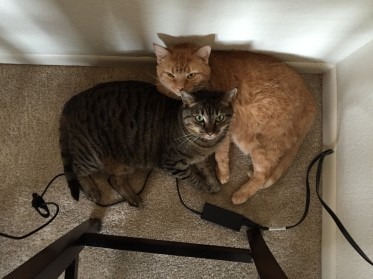 winnie and fuzzy under table
